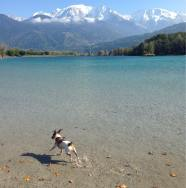 Fidji the chalet dog at Lac Passy, with Mont Blanc!