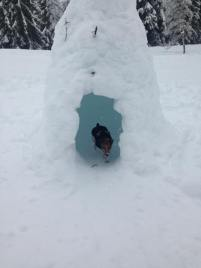 Fiji in an igloo!